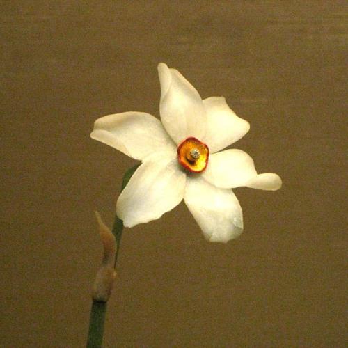 Daffodils for violin and percussion (2019)