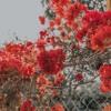 Download Autumn Leaves (Ed Sheeran) Mp3