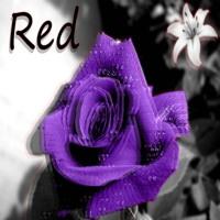 Red Ft Heartless Hippy [ Prod. Rizi ] - Hopeless_tsc