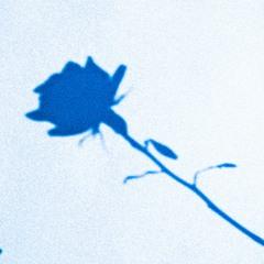 YOKOHAMA BLUES (SEKAI NO OWARI cover)