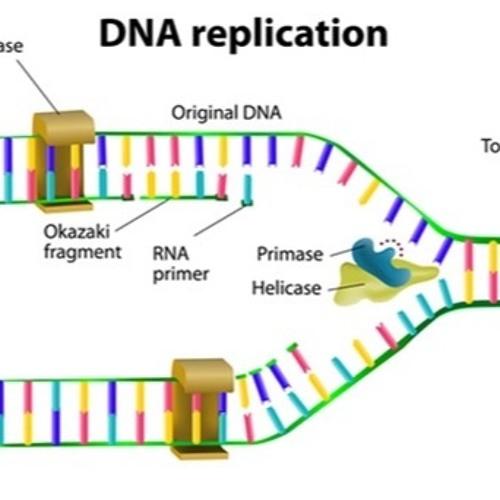 Criminal Mischief: Episode #17: DNA And Identical Twins