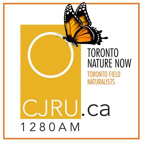 Toronto Nature Now Ep. 22: Jefferson Salamanders