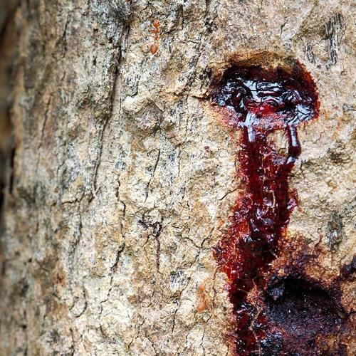 3.Cicatrices de la Madre Tierra | Luchas por el territorio: Voces de mujeres en resistencia[Español]
