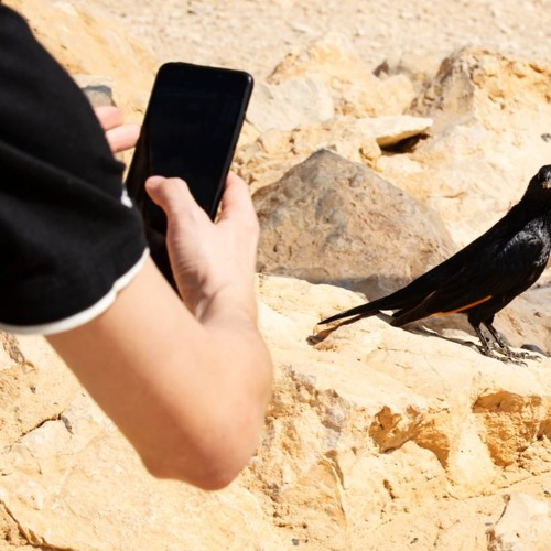 Do Plants And Birds Deserve Online Privacy?