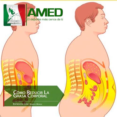 Podcast 285 AMED - Cómo Reducir La Grasa Corporal Recomendaciones Proteicas Para La Pérdida De Grasa