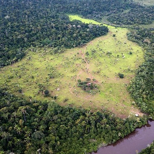 World in Progress: Brazil's Bolsonaro vs. the Amazon