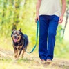 8 Simple Tips to Teach Your Dog to Walk Nicely on Leash - Episode 61