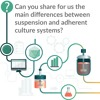 Can you share the main differences between suspension and adherent culture systems?