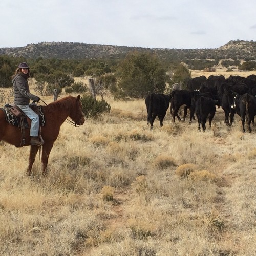 Regenerative Grazing and the Ranney Ranch