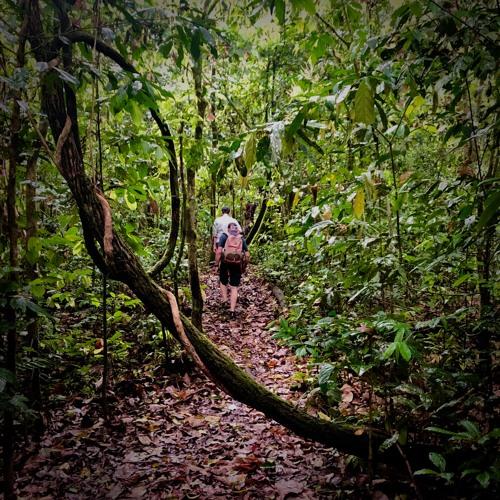 Jungle trek to Coffin Cliff (Borneo)