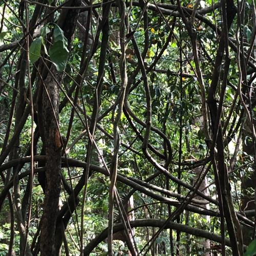 Soundscapes from Borneo: Gaya Island (4) 6am - 8am