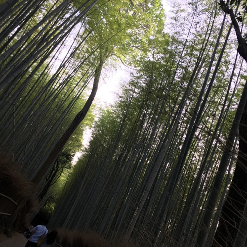 One Minute in the Arashiyama Bamboo Grove (Kyoto): May 18