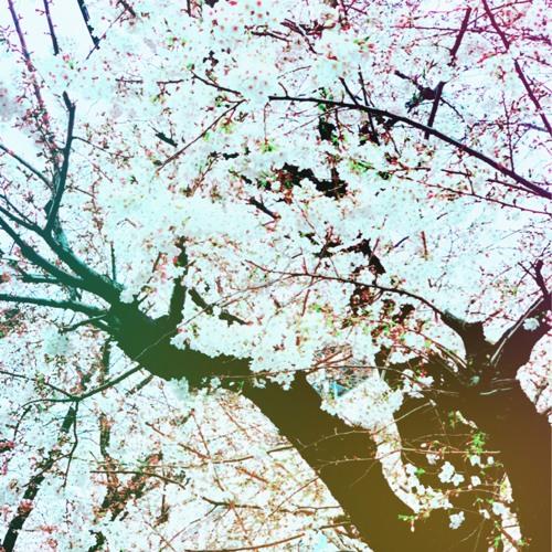 Rhapsodien(für Sakura)