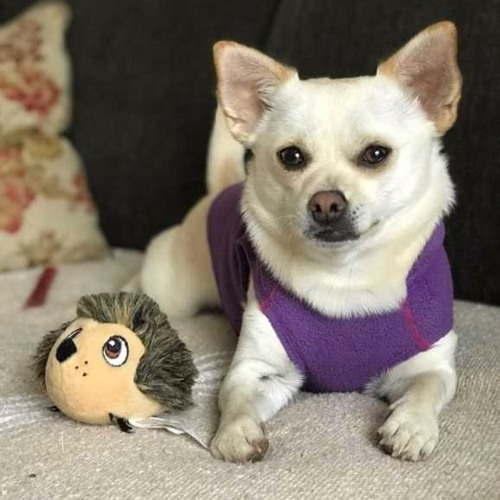 #7 - The Dog Episode
