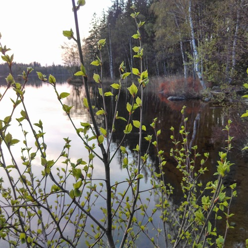 Ojesjon Lake dusk 5 mins April 2019