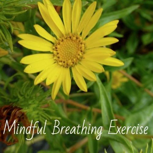 Mindful Breathing Exercise