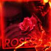 Roses (Prod_Xelfiy)