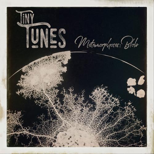 Tiny Tunes, Metamorphoses: Physarum Polycephalum (Blob)