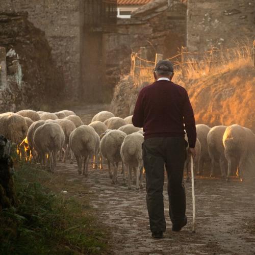 The Voice Of The Good Shepherd