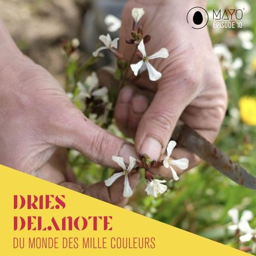 #10 Dries Delanote du Monde des Mille Couleurs