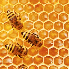 FAO Podcast - It's not just about the honey