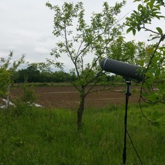 Birds in a cold day in May, Sennheiser ME 80 TEST