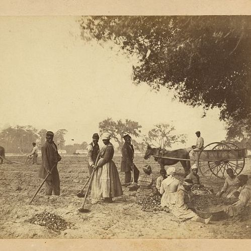 Writing Environmental Histories of Slavery   Tony Perry
