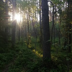 Early morning Soundscape from Alam-Pedja Nature Reserve, Estonia. May 22, 2019