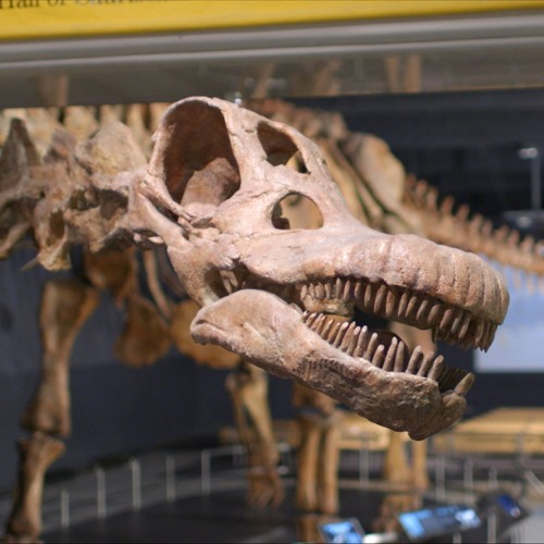 SciCafe: Why Dinosaurs Matter with Diego Pol