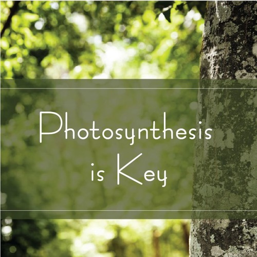 Photosynthesis is Key