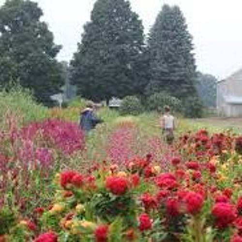 Organic flower growing with Anna Jane Kocon