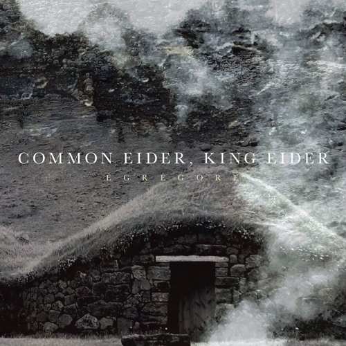 COMMON EIDER, KING EIDER Sun ._. Fire (Excerpt)