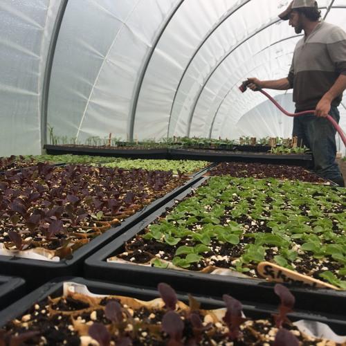 Greenshine Farms Gets Ready for Farm Tour