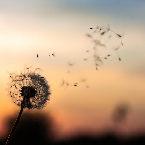 A Dandelion of Grace: 3-Perspectives on Sending