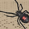 Spider Playing With Proteins