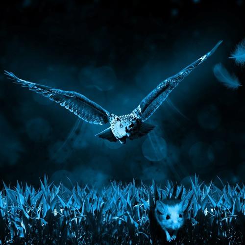 Night owl (Prod. by Tommy Wolf)