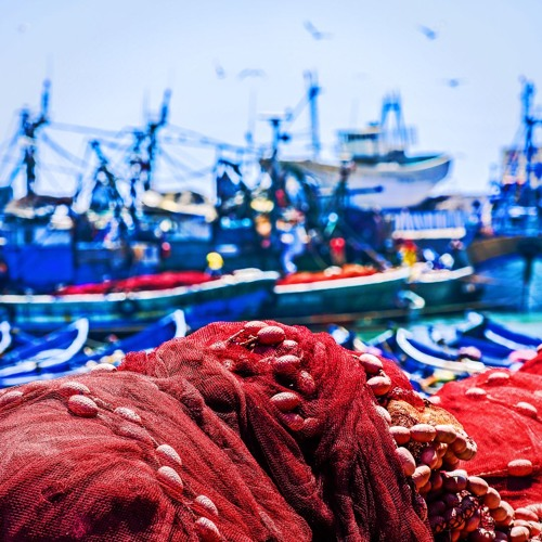 TZH 46 - How do you tackle illegal fishing?