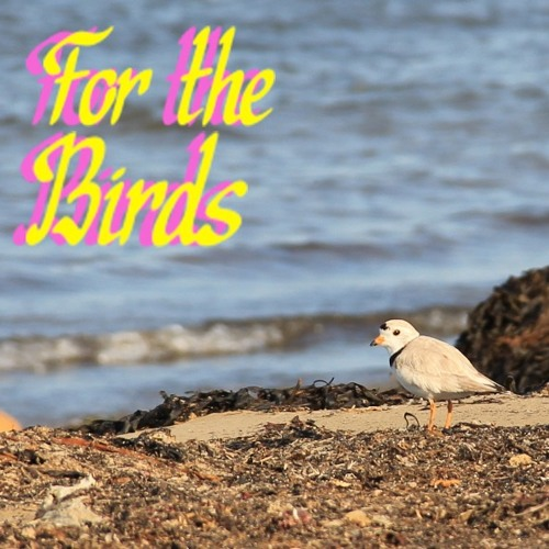 For the Birds Podcast - Episode 01 - Introduction to Birds