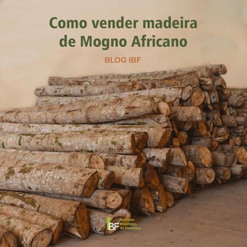 Podcast - Como Vender Madeira de Mogno Africano