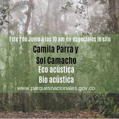 Especiales In situ Eco Acústica y bio acústica