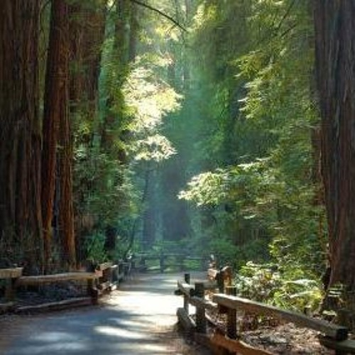 Cathedral Grove (2019) for orchestra