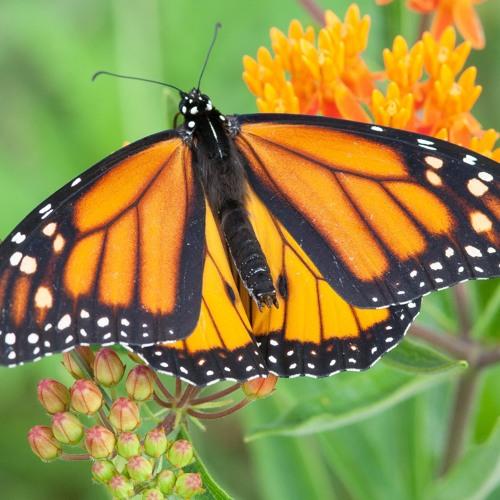 Monarch Meadows Nature Preserve