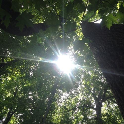 Buttonwood Nature Preserve