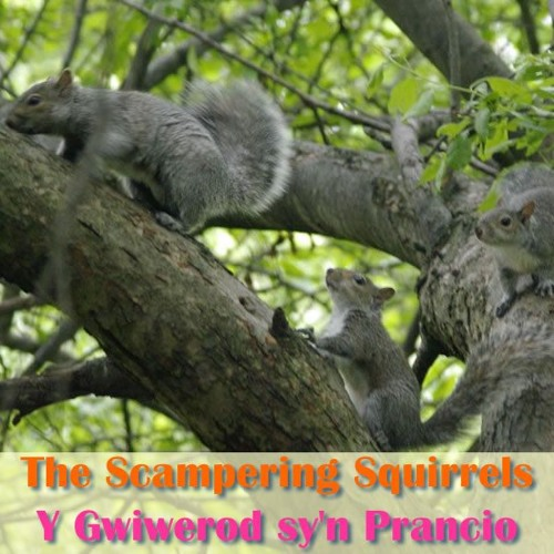 The Scampering Squirrels / Y Gwiwerod sy'n Prancio
