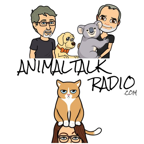 Animal Talk - Episode 68 Just Kitten