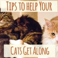 Tips To Help Your Cats Get Along