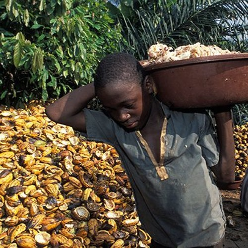 Bob Koigi: West Africa cocoa pricing model should inspire an end to child labour
