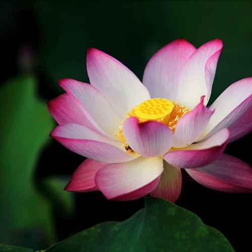 Yoga Nidra for Restorative Solar Plexus Sleep