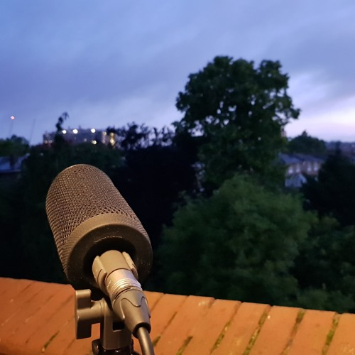 Blackbird at dawn