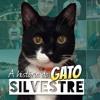 #1 História do Gato Silvestre